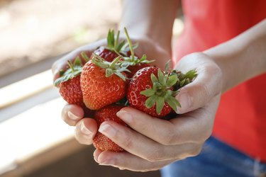 Fresh strawberries picked from a strawberry farm