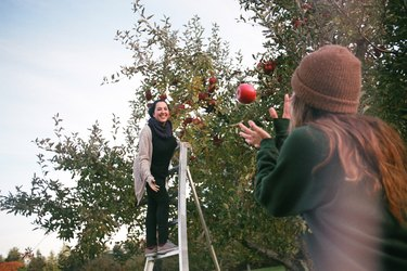 Young women in an apple orchard