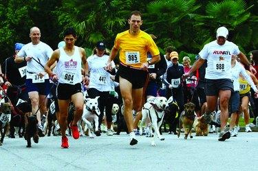 Runners at the Atlanta Dog Jog