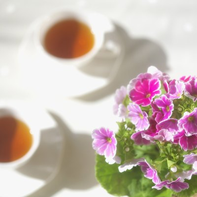 Two cup of teas and potted lowers