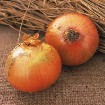 Closed Up Image of Two Onions, Next to Some Straw, High Angle View