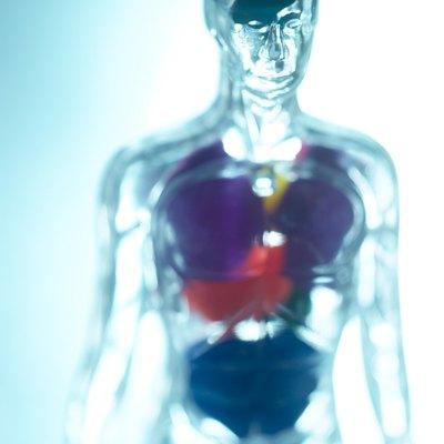 Transparent scientific human model