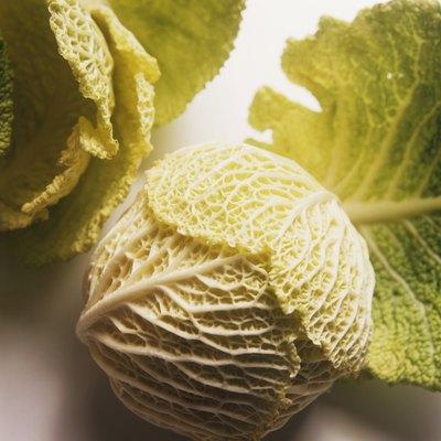 Savoy Cabbage & Savoy Cabbage Leaves