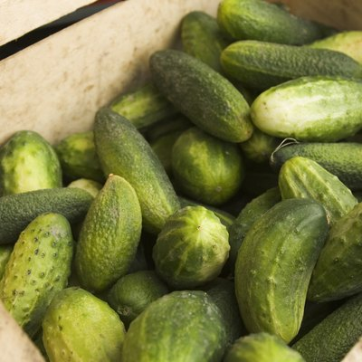 horizontal,healthy,cucumber,day,market,photography,mature,fresh,indoors,vegetable,edible,close up,nobody,color image,eatable,02a10b8d,ingram