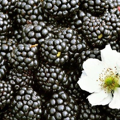 Blackberries background.