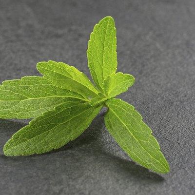 Stevia leaves on a slate plate