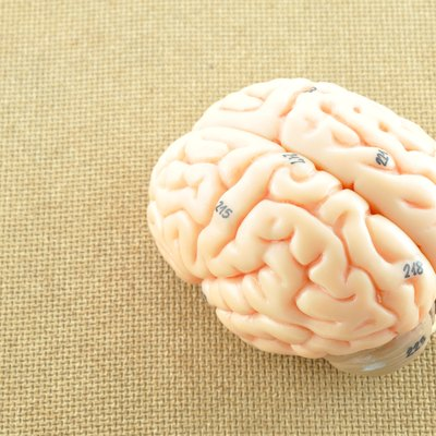 human brain on wooden background
