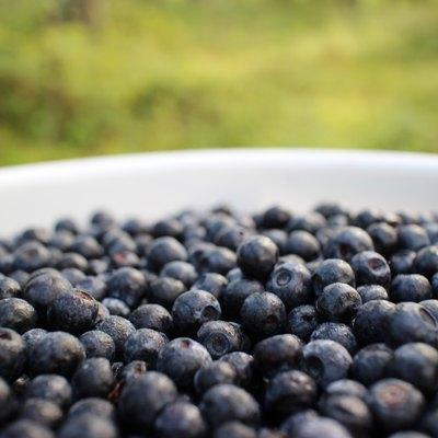 Berries in bucket