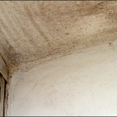 Mold on the ceiling near the window