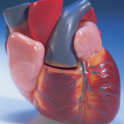 close-up of a model of the human heart