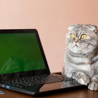 The cat lies near the laptop with green screen. Bank card located near the laptop.