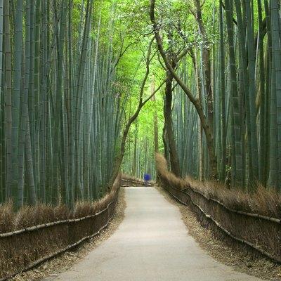 Path through bamboo forest, Kyoto, Honshu, Japan