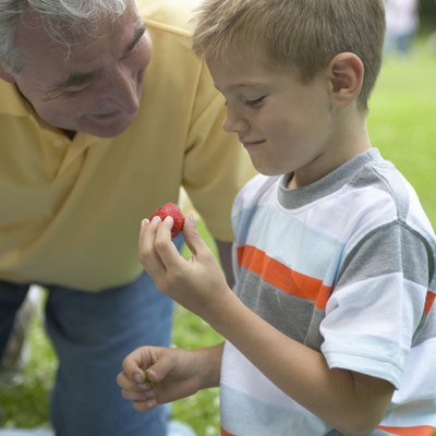 """""""Boy (6-8) and grandfather outdoors, boy holding strawberry"""""""