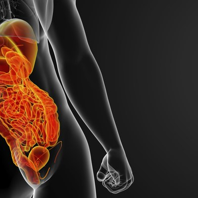 3d render illustration of human digestive system