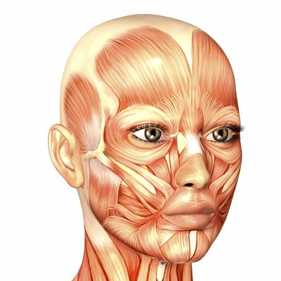 Illustration of the anatomy of a female human face