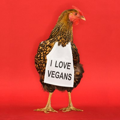 chicken wears bib with text: I love vegans