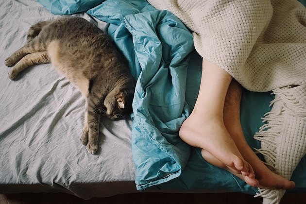 woman sleeping in bed next to kitten