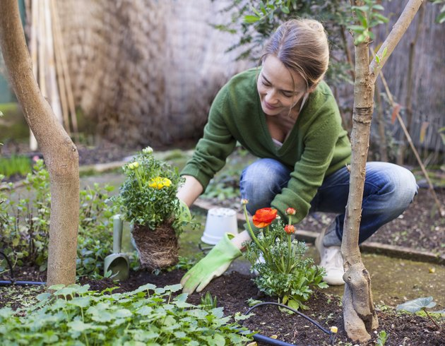 Woman planting flowers in her backyard, Rome, Italy
