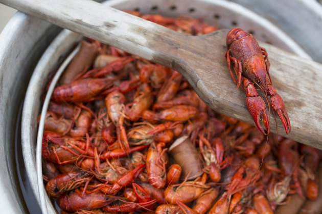 A pot with cooked red crawfish in it for a crawfish boil.