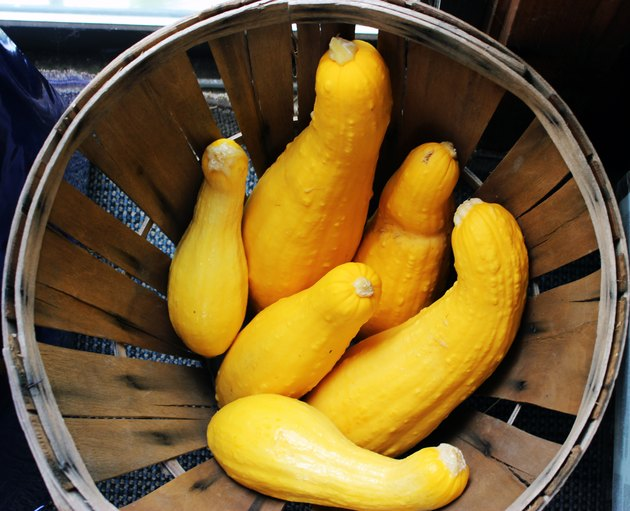 close-up of crookneck squash in round basket with rim