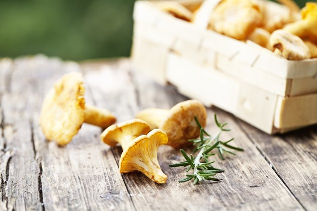 chanterelle and rosemary