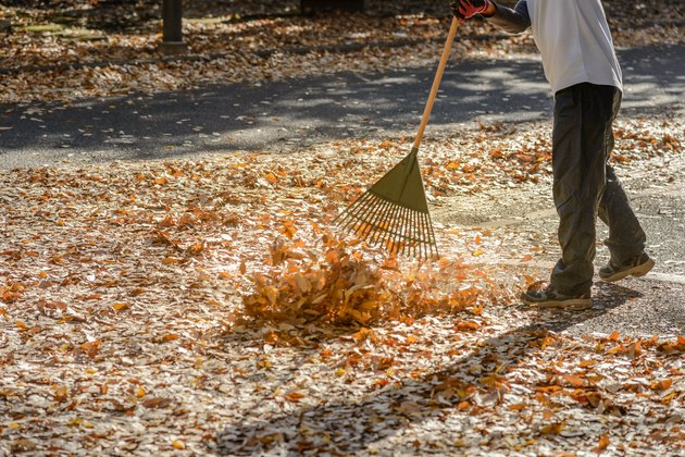 Man cleaning leaves in autumn season