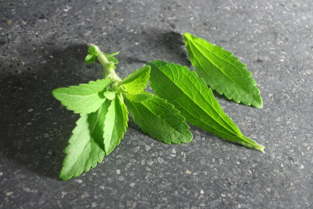 Stevia or Sweet Herb