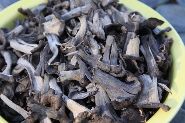 Black Trumpet Mushrooms in a bowl on a table