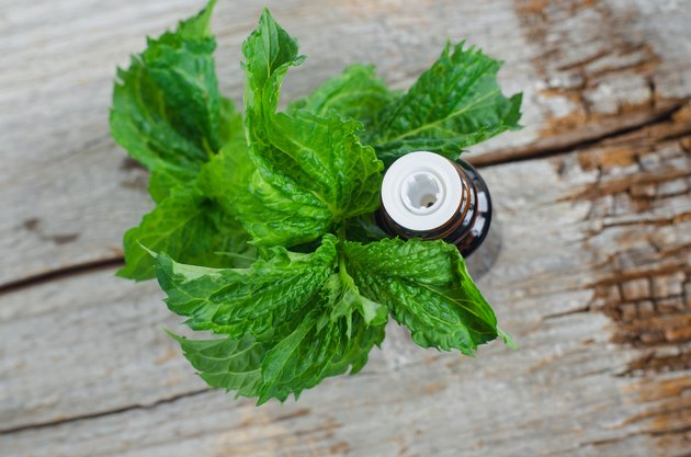 Small bottle with essential mint oil on the old wooden background. Fresh spearmint leaves close up. Aromatherapy, spa and herbal medicine ingredients. Copy space