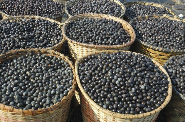 Acai Fruit Harvest and Market