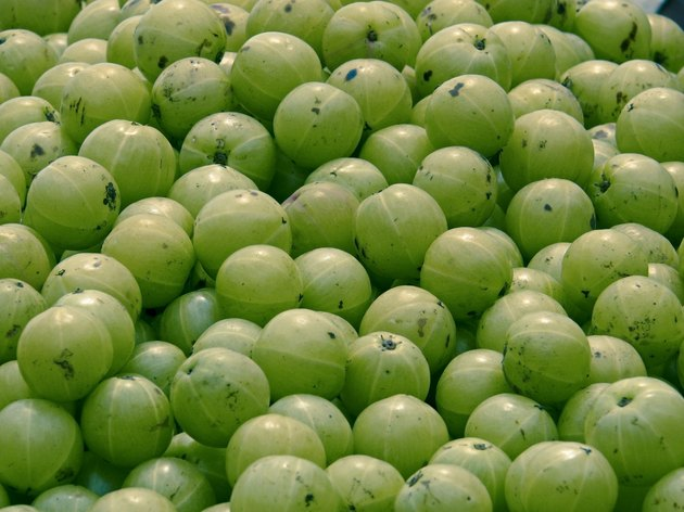 Amla, Emblica officinalis for sell at market
