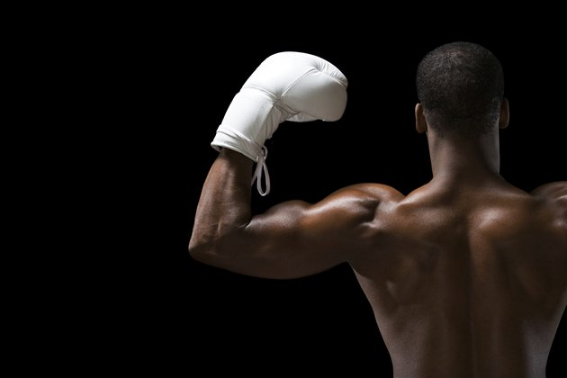 Rear view of a boxer