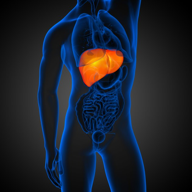 3d render medical illustration of the liver
