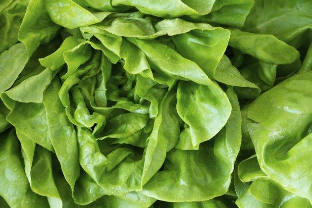 Fresh Lettuce at the market