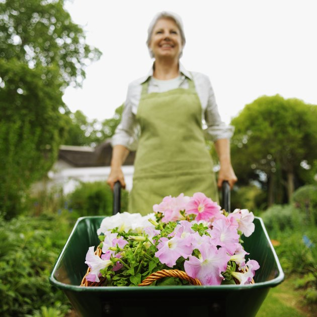 Front view of woman pushing wheelbarrow in garden