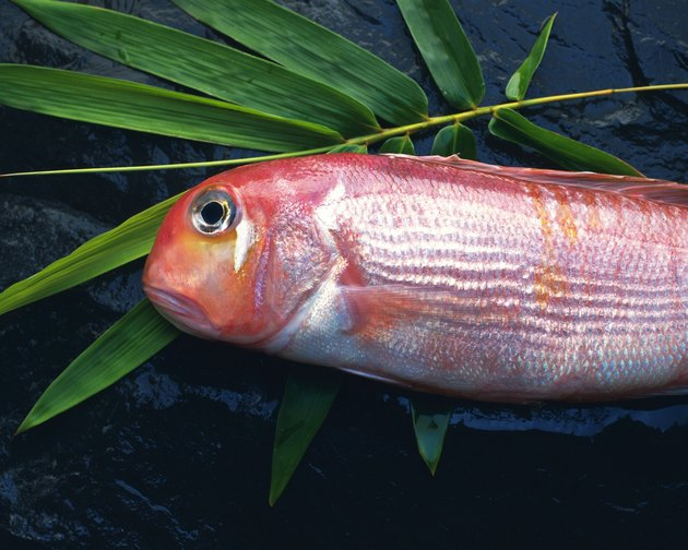 Tilefish on bamboo leaf, side view, close up