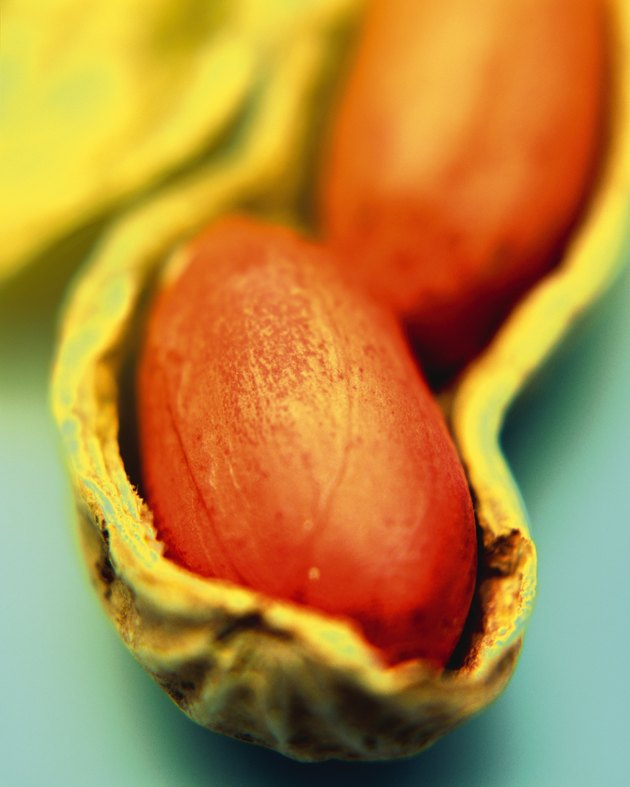 Peanut in Shell, Close Up, Differential Focus, In Focus, Out Focus