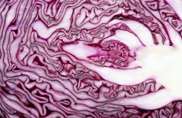 Cabbage cross-section
