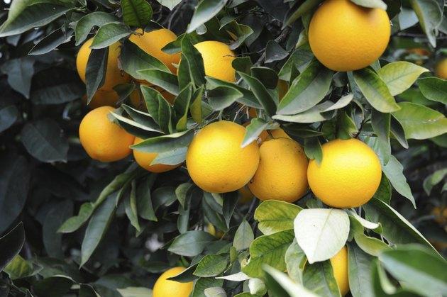 Orangen am Buam - Spanien