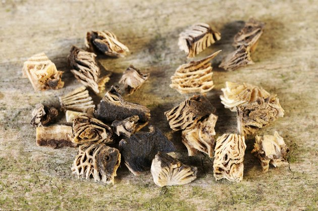 Dried black cohosh root, close up