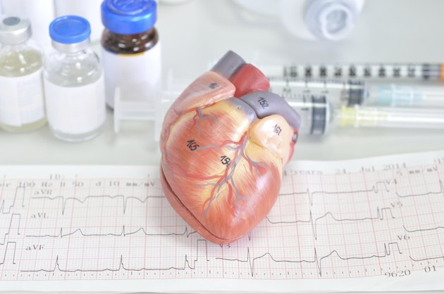 heart model and electrocardiograph