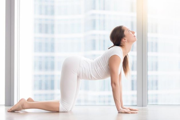 Young attractive woman practicing yoga, stretching in asana paired with Cat Pose on the exhale exercise, Cow, Bitilasana pose, working out, wearing sportswear, white t-shirt, pants, indoor full length