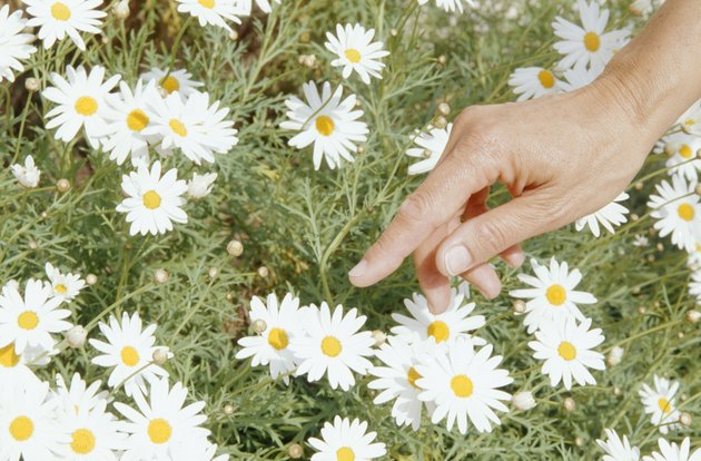 Mature woman picking flowers, (close-up of hand)