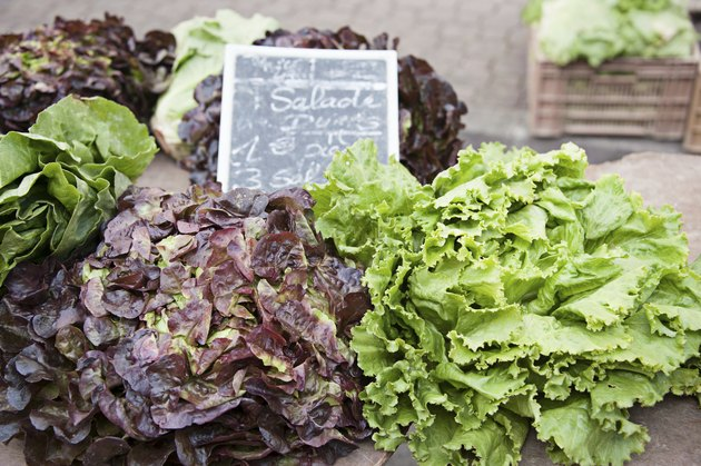 Lettuce various types