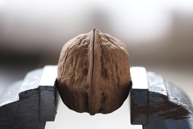 Walnuts in a vise
