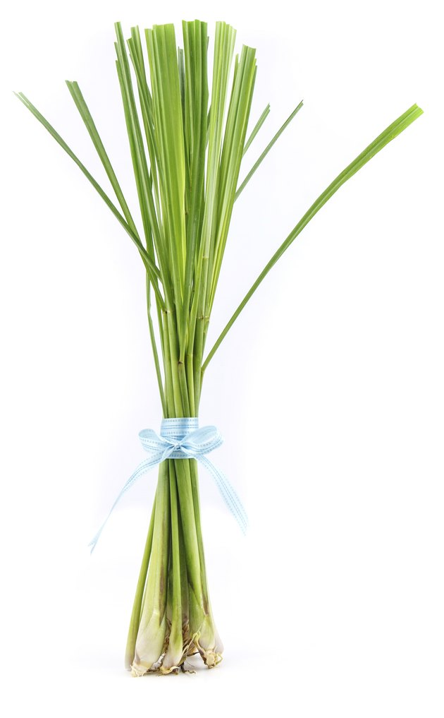 Lemon grass stand on  white background