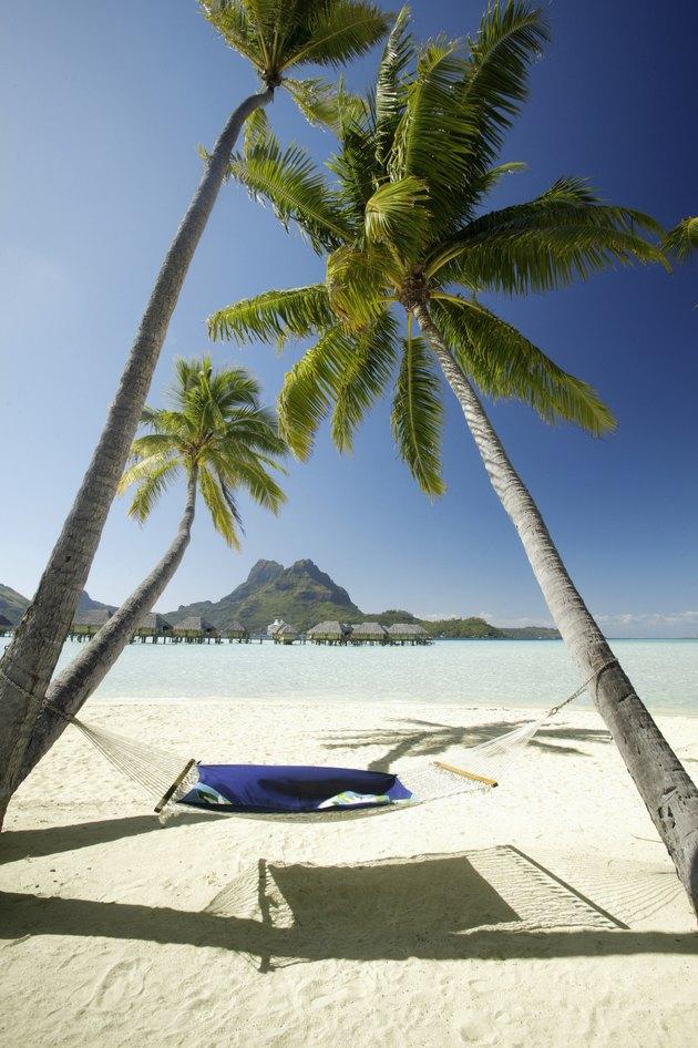 French Polynesia, Tahiti, Bora Bora, Bora Bora Pearl Resort, A hammock hanging between two palm trees
