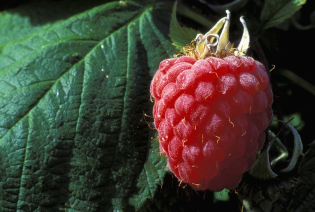 Close-up of a raspberry