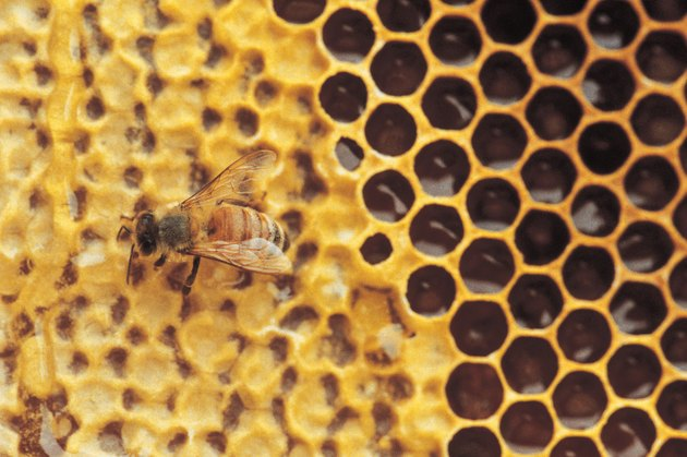 Honeycomb and bee