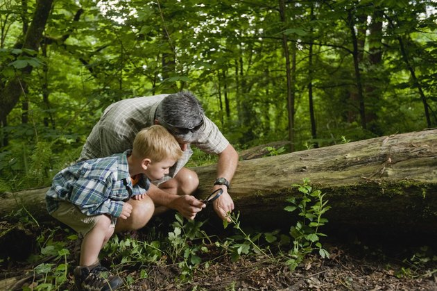 Father and son with magnifying glass in forest